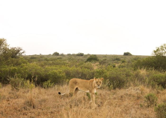 Explore It All Travel Blog: Shamwari Game Reserve13